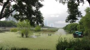 reserva ecologica costanera sur
