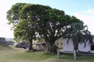Parque Nacional de Santa Teresa