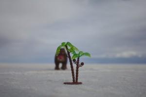 Salar de Uyuni - wildlife